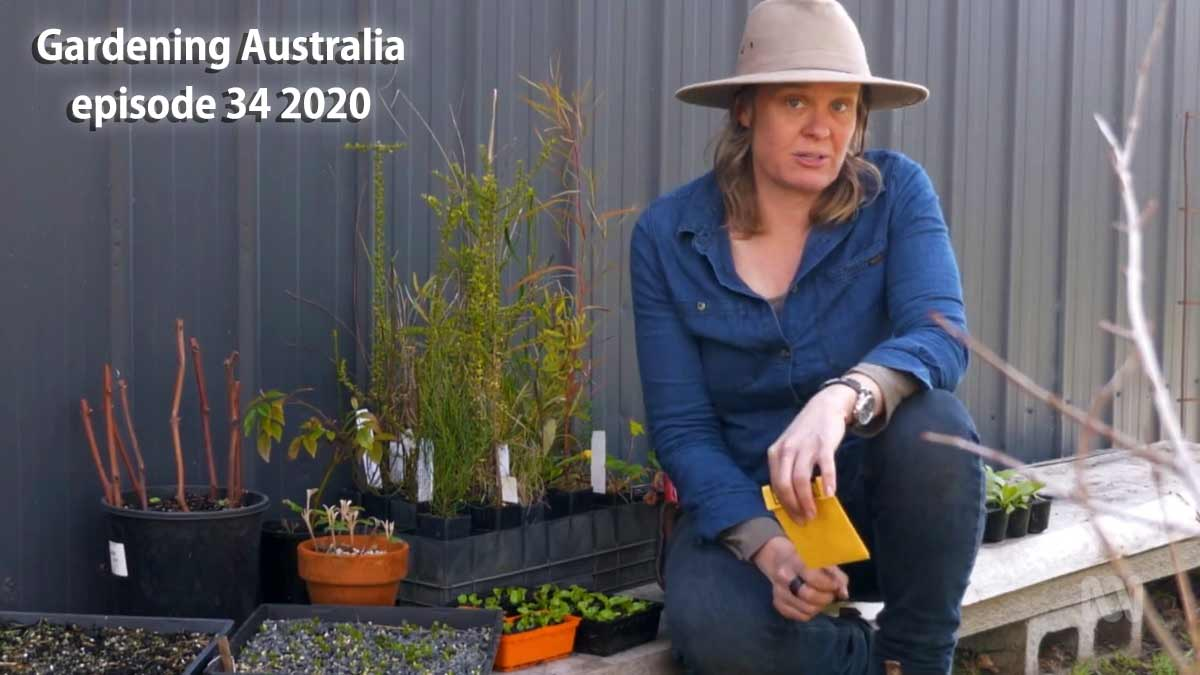 Read more about the article Gardening Australia episode 34 2020