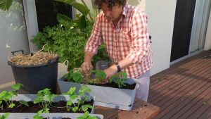 Read more about the article Gardening Australia episode 37 2020