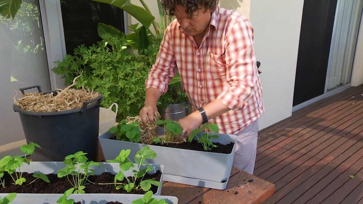 Gardening Australia episode 37 2020