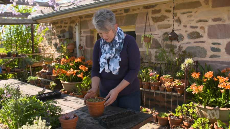Gardening Australia episode 39 2020