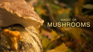 Read more about the article The Magic of Mushrooms