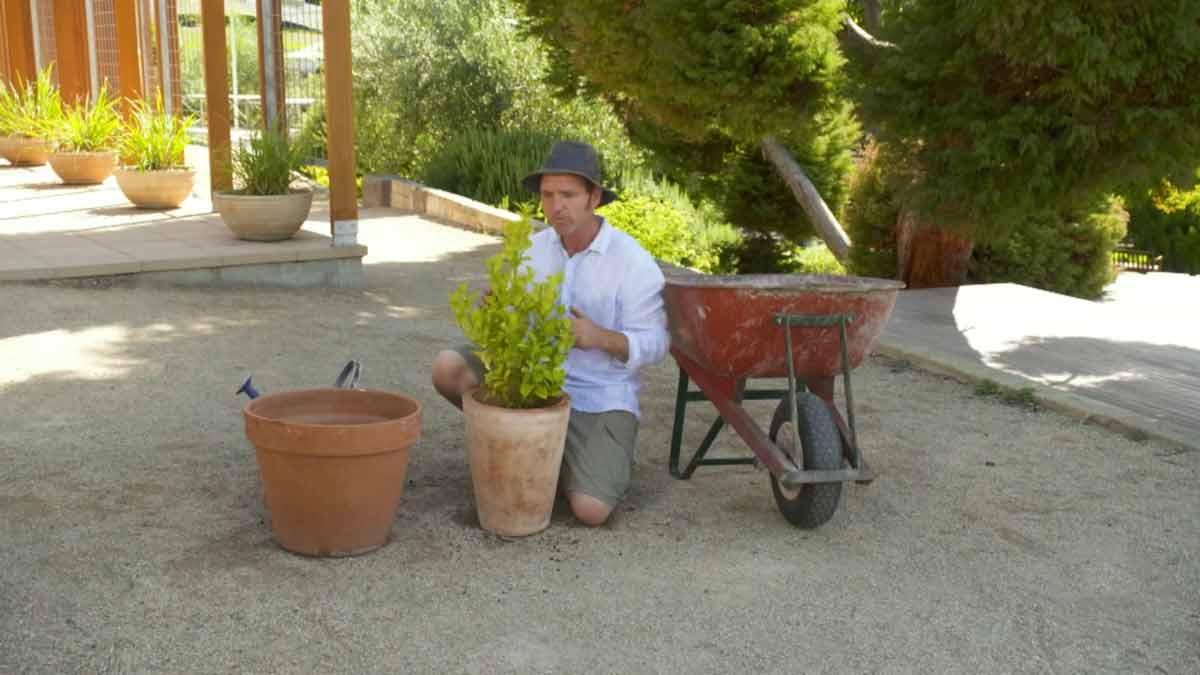 Gardening Australia episode 3 2021