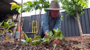 Gardening Australia episode 6 2021