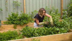 Gardening Australia episode 7 2021