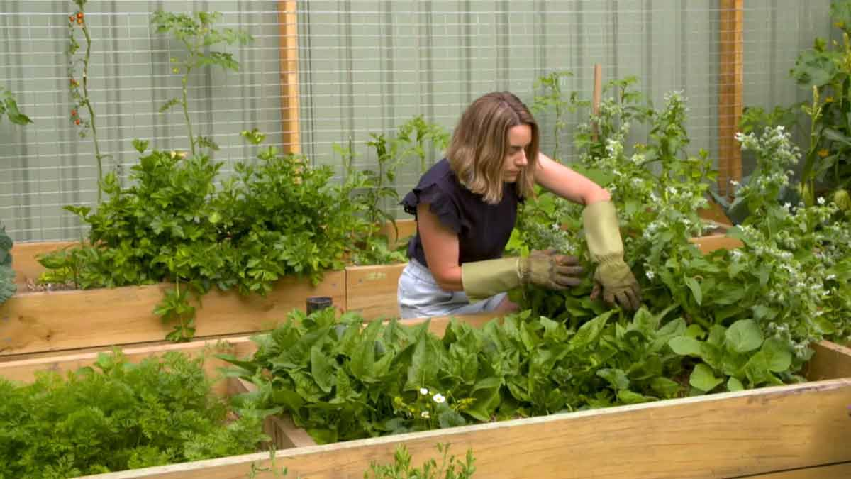 Read more about the article Gardening Australia episode 7 2021