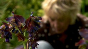 Read more about the article Life in a Cottage Garden with Carol Kleine episode 4 – High Summer