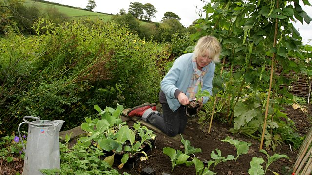 Read more about the article Life in a Cottage Garden with Carol Kleine episode 5 – Autumn