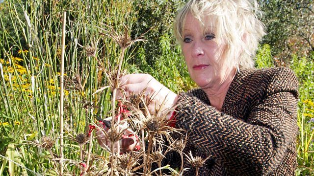 Read more about the article Life in a Cottage Garden with Carol Kleine episode 6 – Into Winter