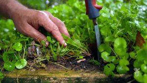 Gardening Australia episode 10 2021