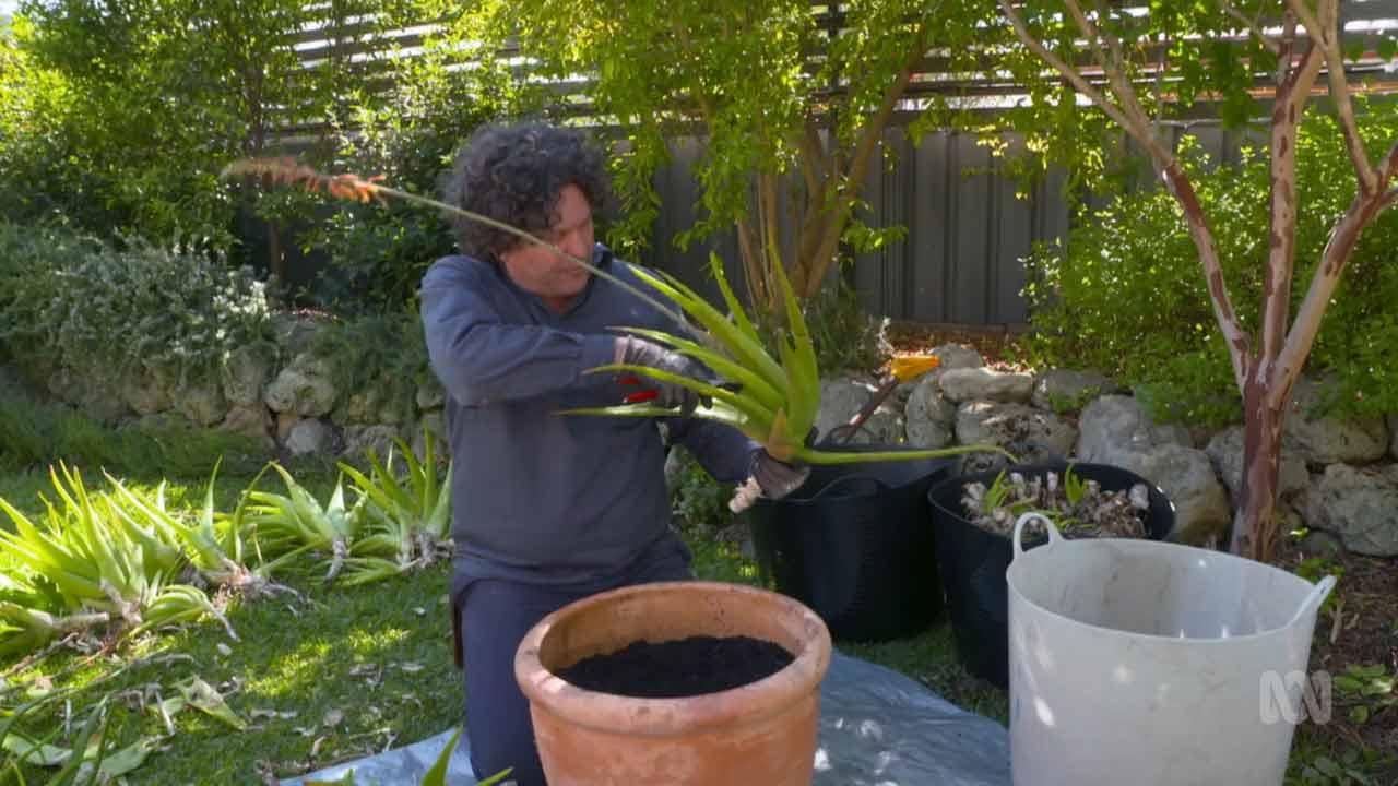 Gardening Australia episode 11 2021