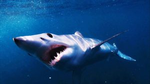 Read more about the article Shark episode 2