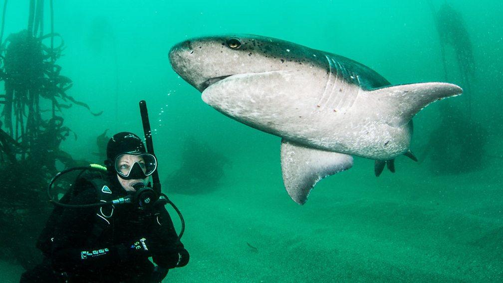 Shark episode 3
