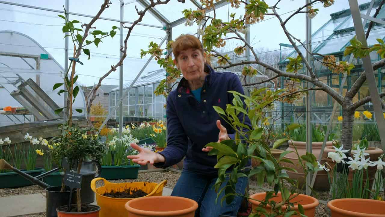 Read more about the article The Beechgrove Garden 2021 episode 5