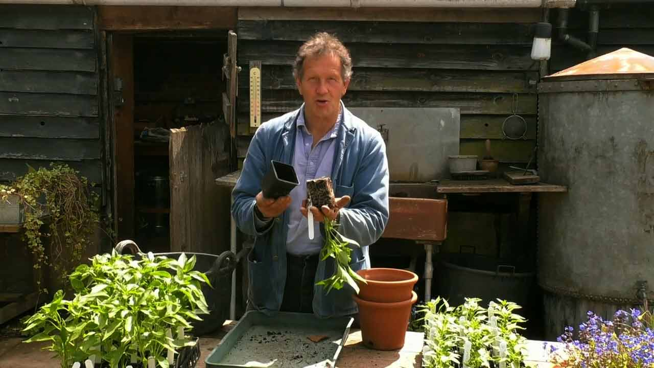 Read more about the article Gardeners' World 2021 episode 10