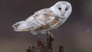 Read more about the article Springwatch episode 1 2021