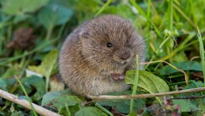 Read more about the article Springwatch episode 4 2021