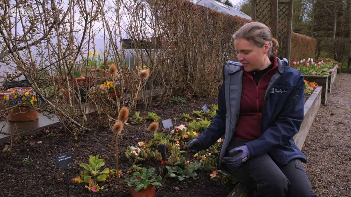 Read more about the article The Beechgrove Garden 2021 episode 7