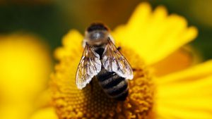 Read more about the article Bees, Butterflies and Blooms episode 1