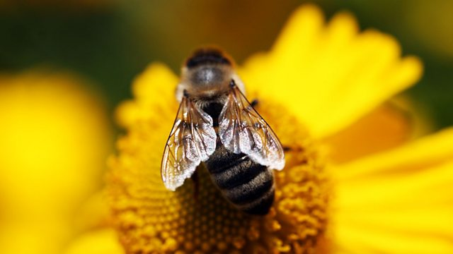 Bees, Butterflies and Blooms episode 1