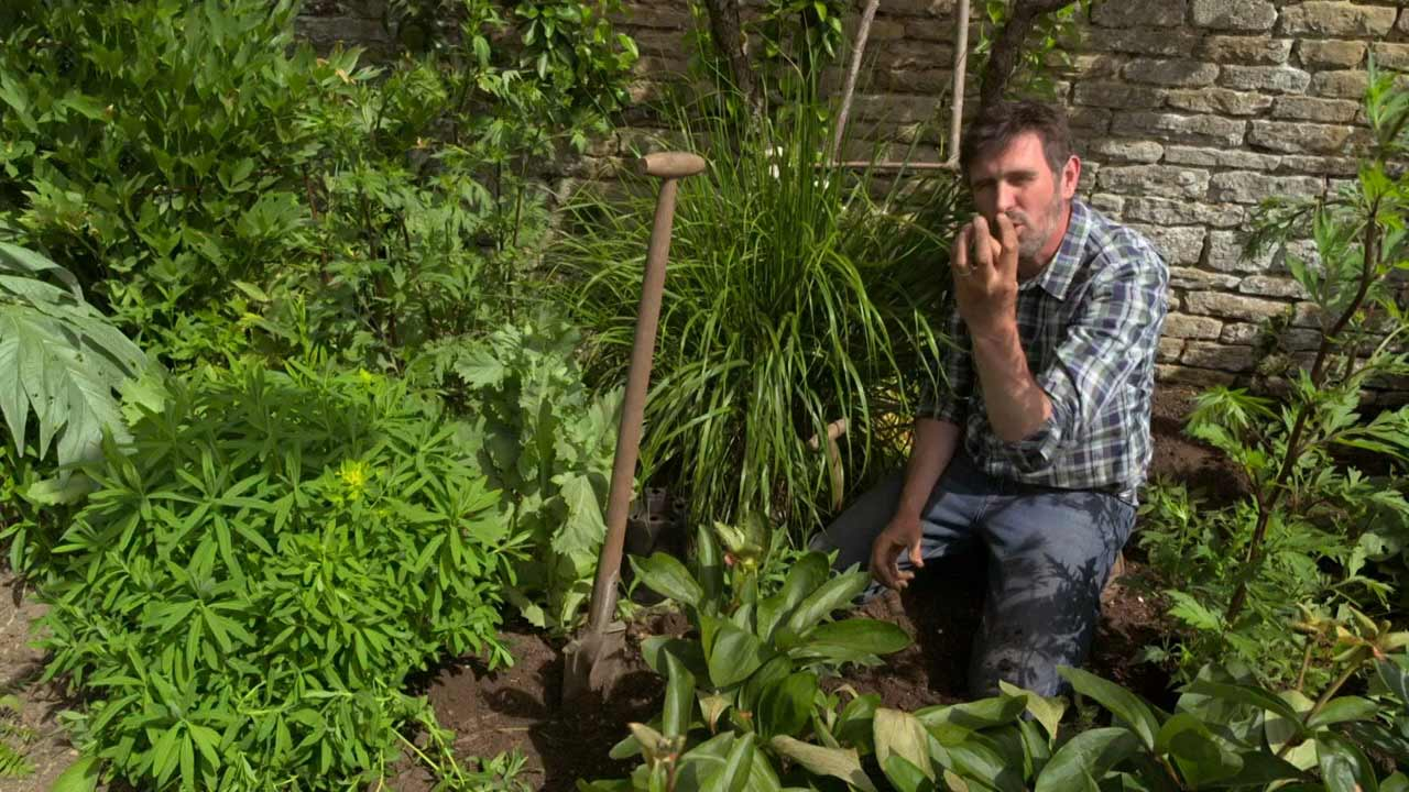 Read more about the article Gardeners' World 2021 episode 15