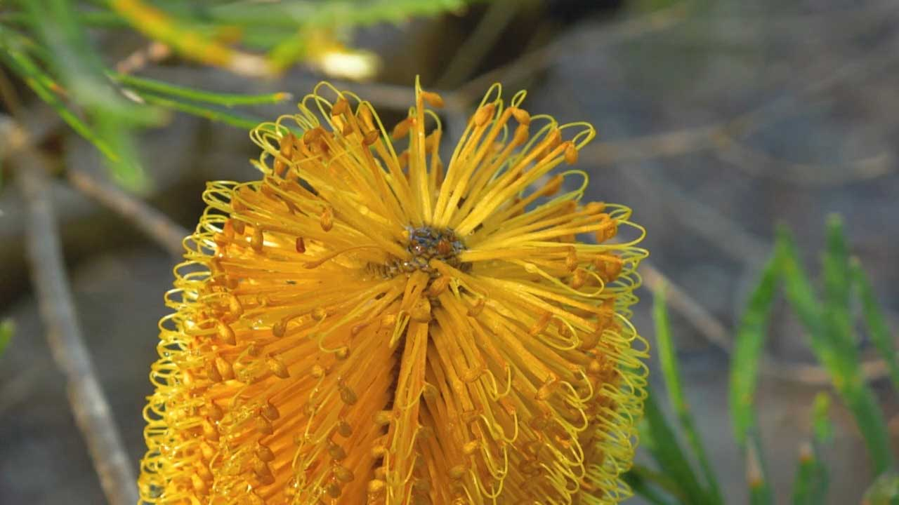 Read more about the article Gardening Australia episode 17 2021