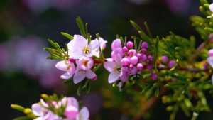 Read more about the article Gardening Australia episode 19 2021