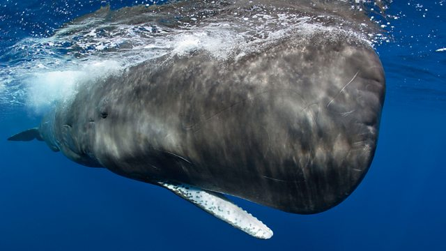 Read more about the article Ocean Giants episode 3 – Voices of the Sea