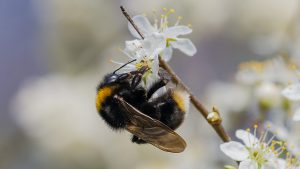 Read more about the article Springwatch episode 10 2021
