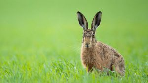 Read more about the article Springwatch episode 9 2021