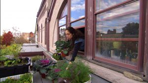 Read more about the article Garden Secrets episode 1 – Urban Gardening