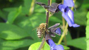 Read more about the article Garden Secrets episode 2 – Flower Power
