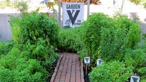 Read more about the article Garden Secrets episode 3 – Victory Veggies