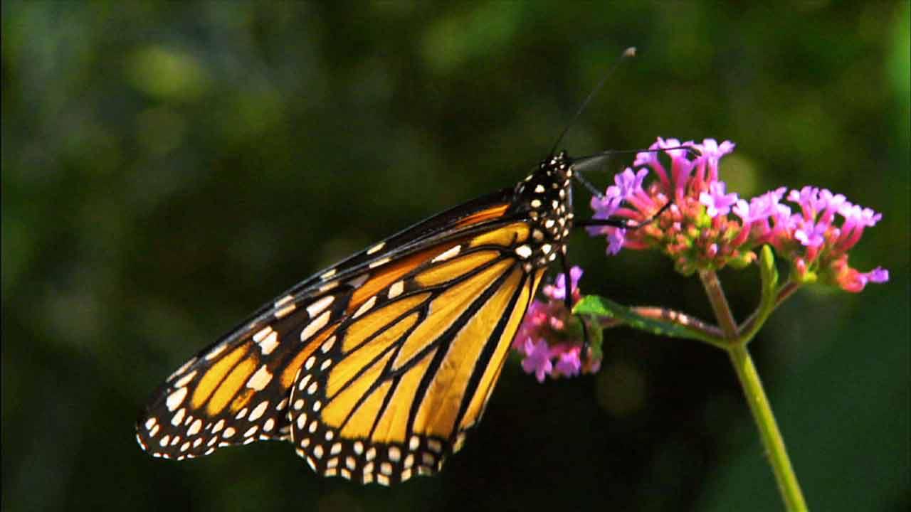 Read more about the article Garden Secrets episode 4 – Pollinator Power