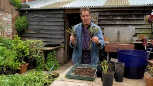 Read more about the article Gardeners' World 2021 episode 23