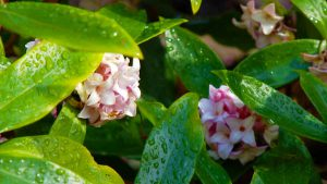 Read more about the article Gardening Australia episode 23 2021