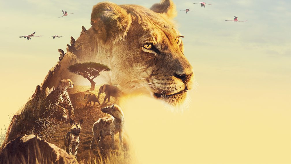 Read more about the article Serengeti episode 1