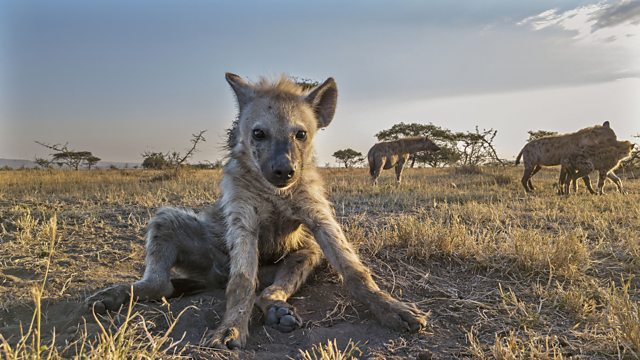 Read more about the article Serengeti episode 5