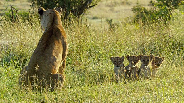 Read more about the article Serengeti episode 6
